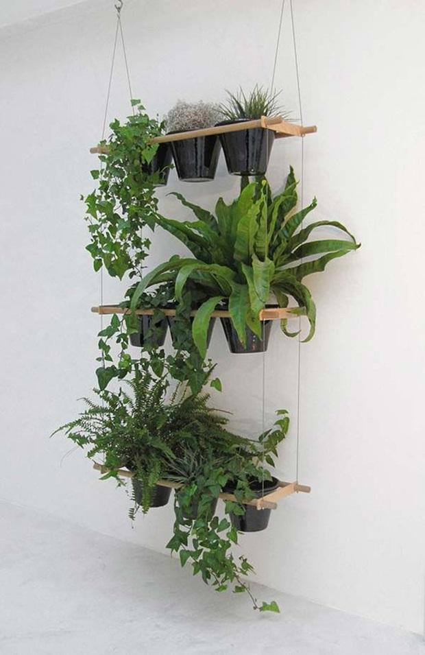 Plantas ornamentais para interiores como usar for Jardines colgantes para interiores
