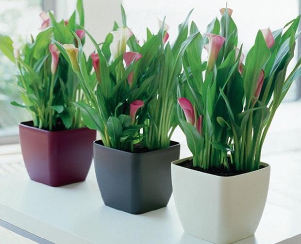 Plantas ornamentais para interiores como usar - Plantas decorativas interior ...
