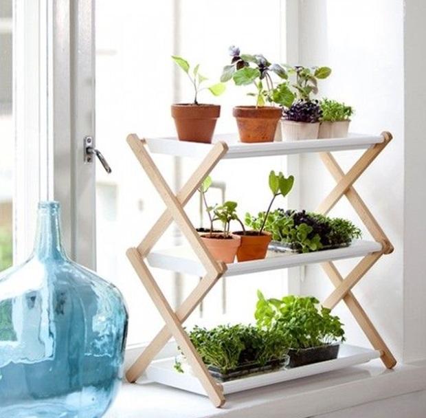 agora algumas inspirações de plantas ornamentais para interiores