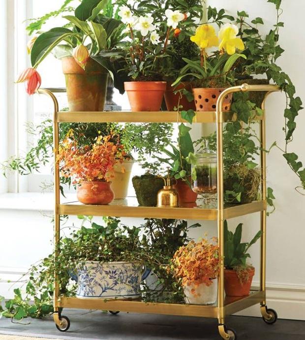 Plantas ornamentais para interiores como usar - Plantas para decorar interiores ...
