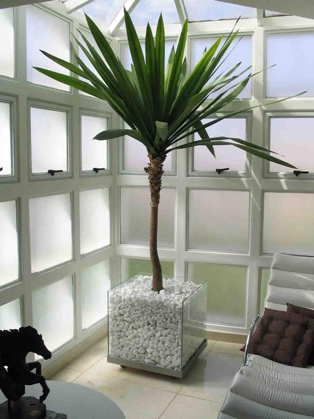 Plantas ornamentais para interiores como usar - Plantas de interior altas ...