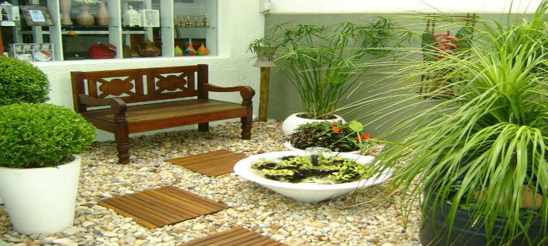 como escolher plantas para jardim de inverno para que os resultados
