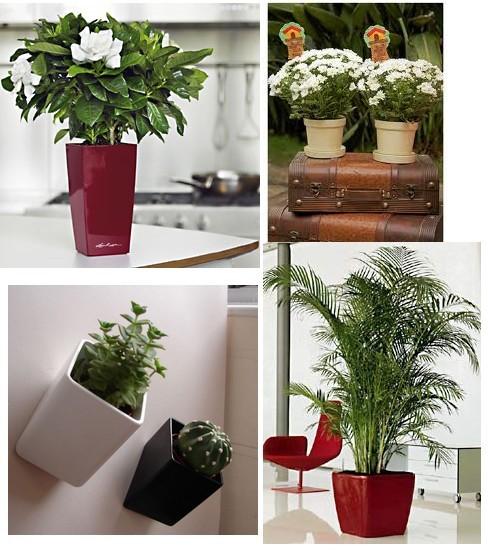 Decora o de interiores com vasos ornamentais - Plantas decorativas de interior ...